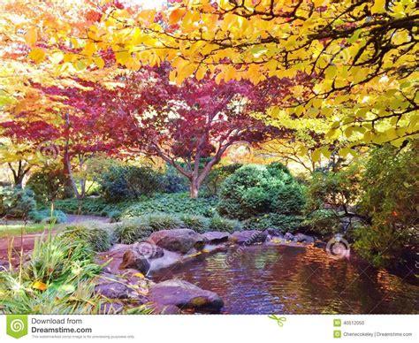 alberi colorati da giardino giardino giapponese in parco lithia con le foglie colorate
