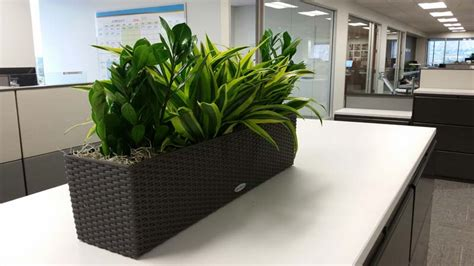 indoor planter boxes interior plants for credit union plantopia interior