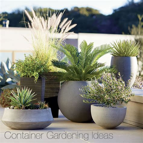 outdoor planter ideas container garden ideas crate and barrel