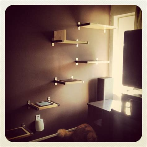 diy cat shelves for the cats