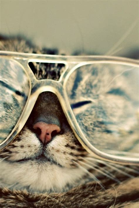 iphone wallpaper cat glasses 640x960 funny cat iphone 4 wallpaper