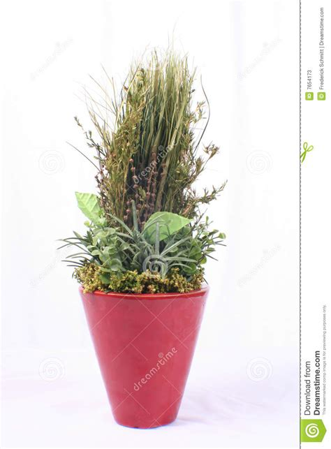 Plant In Vase by Green Plant In Vase Stock Photos Image 7654173