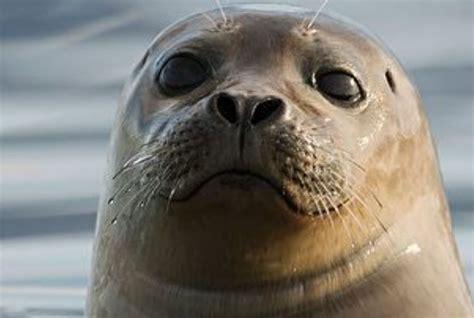 so seal sea lions vs seals dolphin encounters