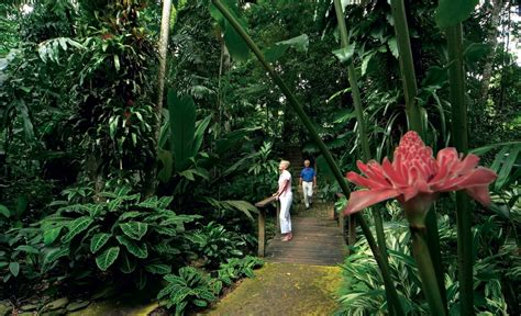 Cairns Botanical Garden Cairns Attractions Cairns Botanical Gardens Attractions
