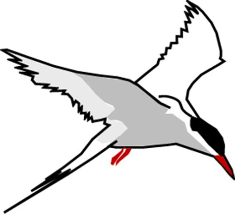 drawings of a sea bird clipart best kayarchy coastal and sea creatures