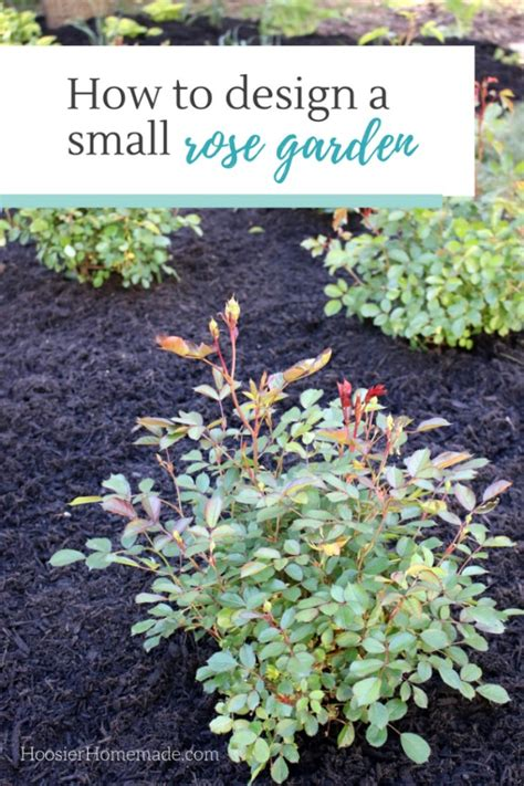 how to design a small rose garden learn how to design and plant your own rose garden