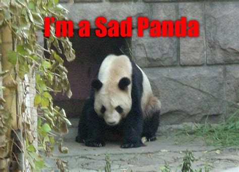 Sad Panda Meme - has mop changed your decision about moving to swtor gw2