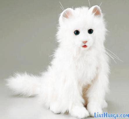 Sho Khusus Kucing Anggora daftar harga kucing anggora murah terbaru 2018 liatharga