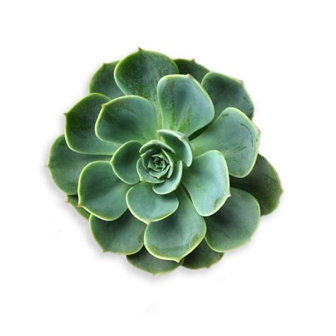 Succulents   Waters True Value