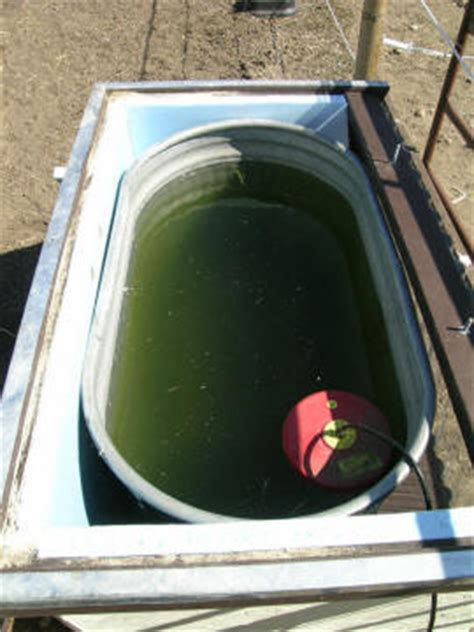 insulated solar horse watering tank
