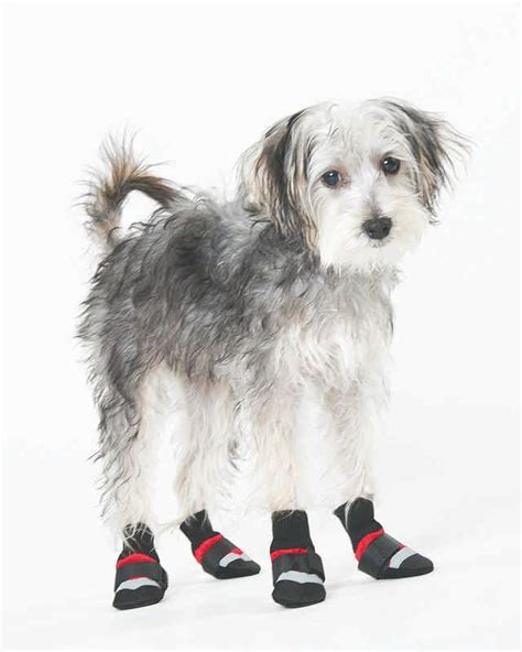 weather puppy all weather boots horseloverz