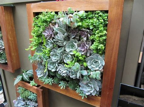 Best Succulents For Vertical Garden The Of Decorating With Vertical Succulent Gardening
