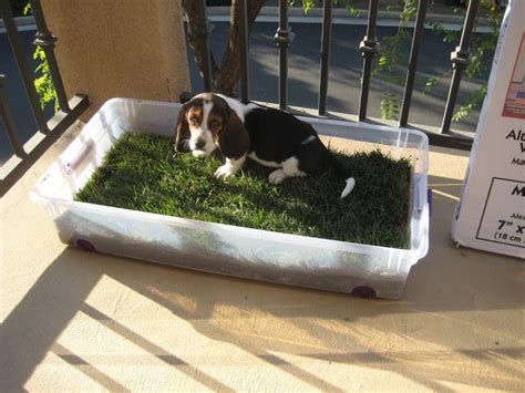 puppy potty apartment another puppy potty grass family