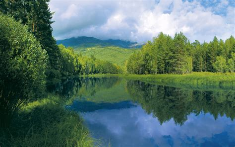imagenes de paisajes verdes para pantalla fondo de pantalla rio entre arboles verdes hd