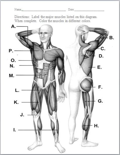 Muscular System Worksheet by Best 25 Muscular System Ideas On