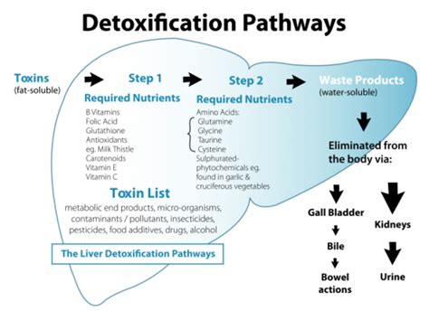 Detox Procedure by How To Detox Your