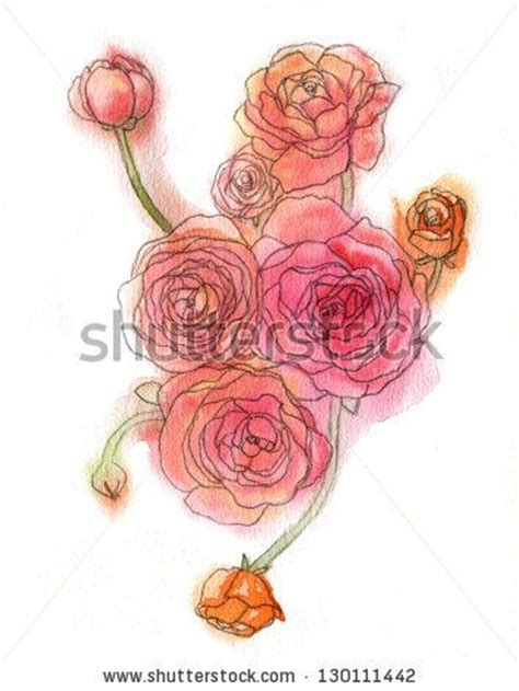 watercolor ranunculus illustration stock photo