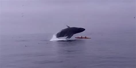 whale lands on boat british tourists amazed to be alive after 40 tonne