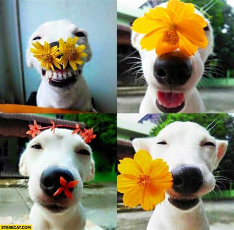 puppy flowers happy puppy with flowers starecat