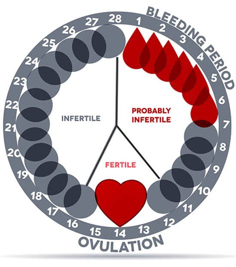 gestation period calculator menstrual cycle pregnancy chart www pixshark images galleries with a bite