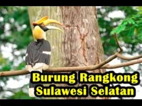 download film dokumenter fauna persebaran flora dan fauna indonesia by lukman oim watch