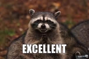 Raccoon Meme - evil raccoon meme excellent