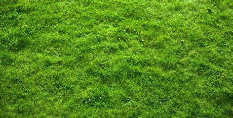 grass background pattern free second life marketplace realistic grass texture