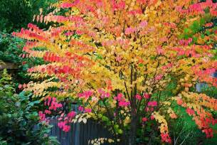 tree colors the garden plot 10 best trees for brilliant fall color