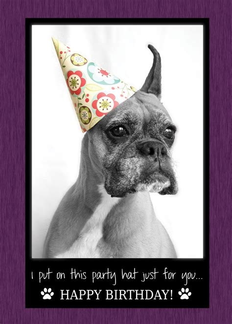 Happy Birthday Meme Dog - i put on this party hat just for you happy birthday