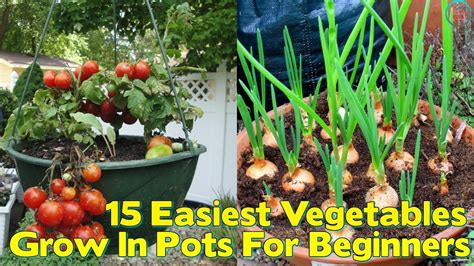 vegetables grown in 15 easiest vegetables to grow in pots for beginners