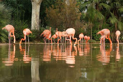 barcelona zoo barcelona zoo
