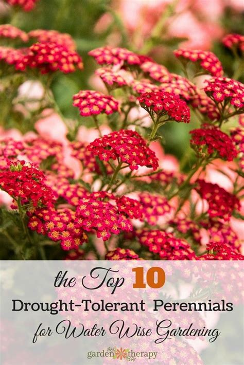 flower gardening tips 74 best images about garden on front yards