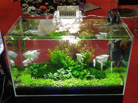 vendita vasche acquario vendita acquari