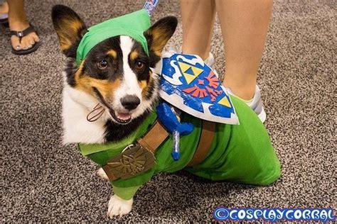 images  zelda costume  pinterest legends
