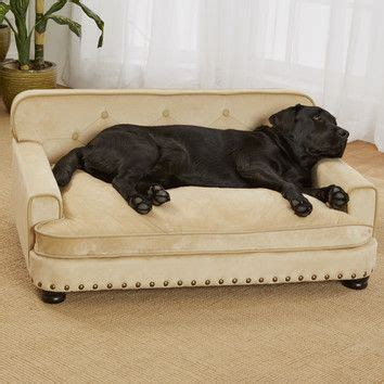 big dog on couch best 25 dog sofa bed ideas on pinterest cat couch buy