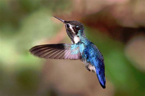 quizzes 187 bird watcher s digest