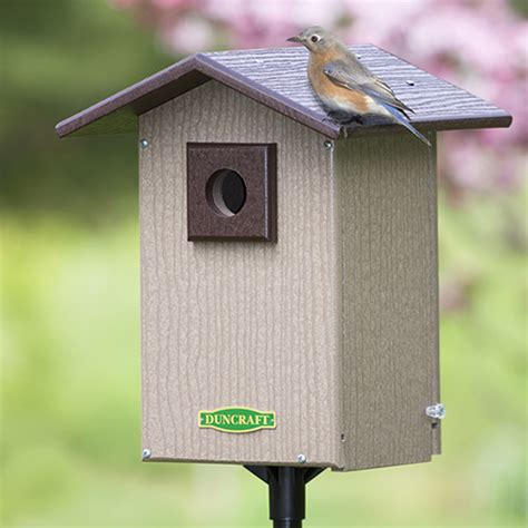 duncraft com bird safe premium bluebird house pole