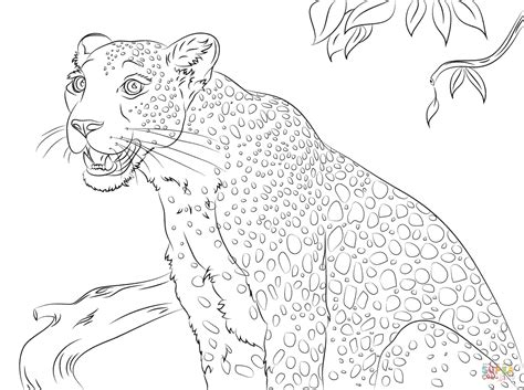 cute leopard coloring pages cute leopard coloring page supercoloring com