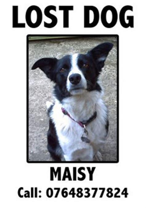 design a poster on your missing pet make your lost dog poster more effective dog blog