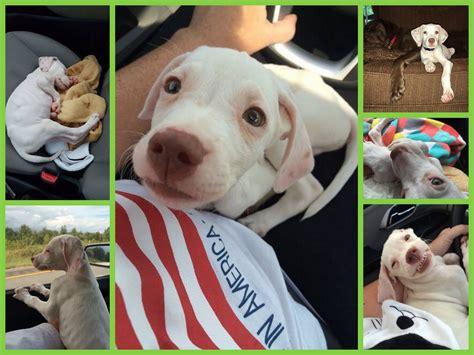 green dogs unleashed puppy bowl pup doobert assisted into rescue by doobert green dogs unleashed