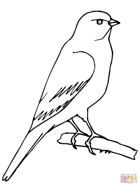 coloring pages canary bird perched canary coloring page supercoloring com
