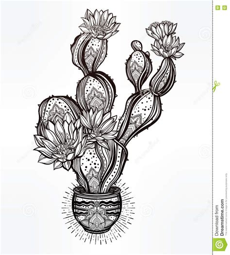 botanical lithograph grayscale coloring book books drawing of cactus pot stock vector