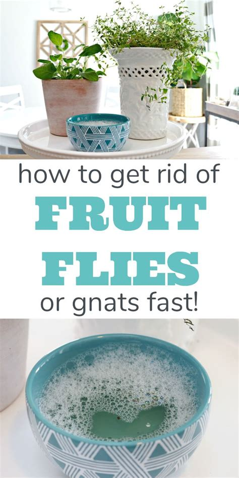 how to get rid of gnats in bathroom best 25 bathroom plants ideas on pinterest best