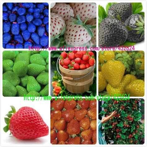 Strawberry Yellow 9kinds of strawberry seeds white yellow blue black