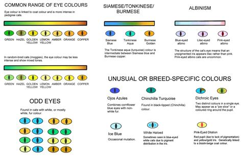 all possible eye colors colour and coat genetics in cats cats from your wildest