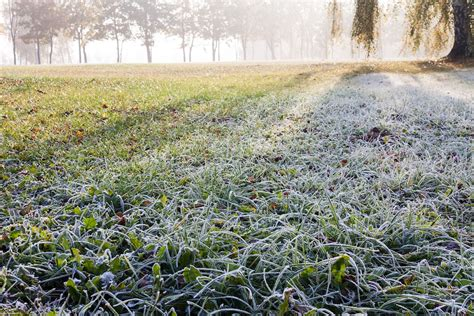 winter lawn care winter lawn care tips home design