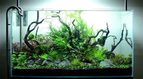 hypnotic timelapse of aquascaping a planted aquarium