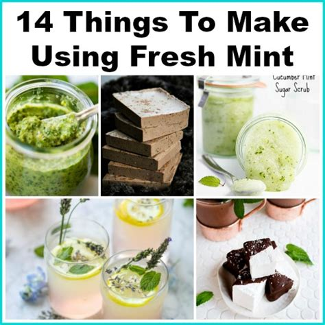 14 things to make using fresh mint a easy to grow herb