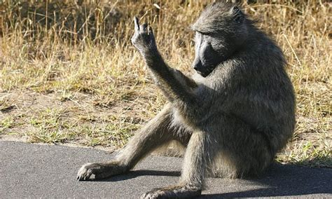 baboon flips  bird  tourists  kruger national park
