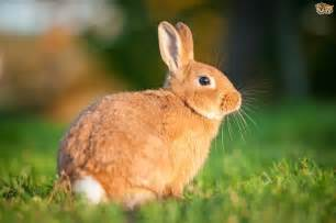 rabbit basics ten facts all potential owners should be